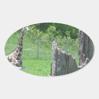 Giraffe Behind a Broken Tree Stump During Summer Oval Sticker