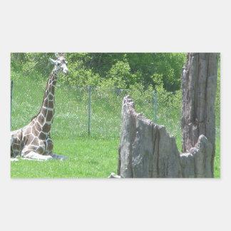 Giraffe Behind a Broken Tree Stump During Summer Rectangular Sticker