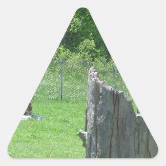 Giraffe Behind a Broken Tree Stump During Summer Triangle Sticker