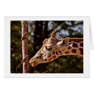 Giraffe Birthday Greeting Card