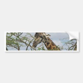 Giraffe Bumper Stickers