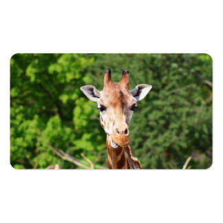 Giraffe Double-Sided Standard Business Cards (Pack Of 100)