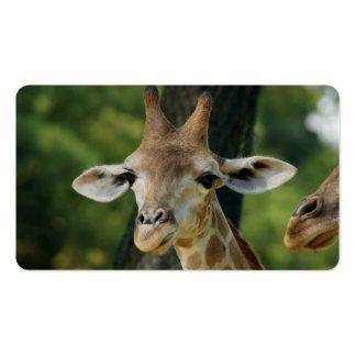 Giraffe Business Card Templates