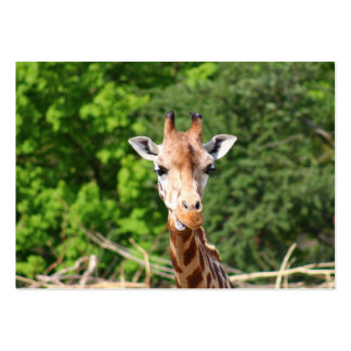 Giraffe Large Business Cards (Pack Of 100)