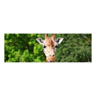 Giraffe Double-Sided Mini Business Cards (Pack Of 20)