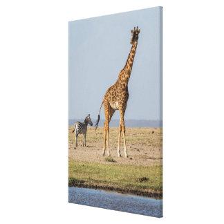 Giraffe by a Waterhole Canvas Print