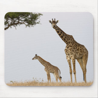 Giraffe Calf and mummy Mouse Pad