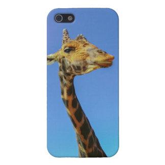 Giraffe Case For iPhone SE/5/5s