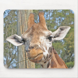 Giraffe Chewing a Stick Mouse Pad