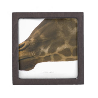 Giraffe,close up jewelry box