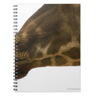 Giraffe,close up note book