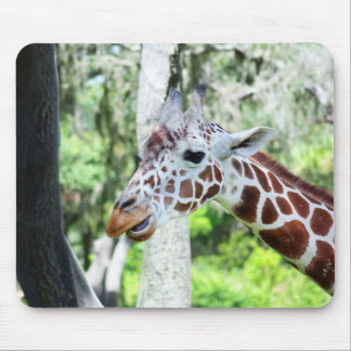 Giraffe Close Up Portrait Mouse Pad