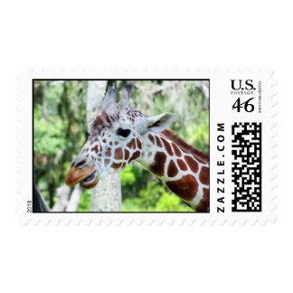Giraffe Close Up Portrait Stamp