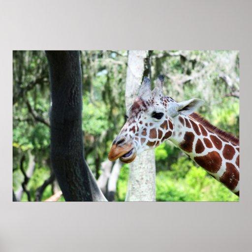 Giraffe Close Up Portrait Poster