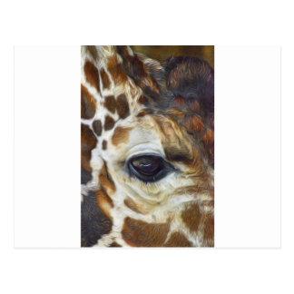 Giraffe Closeup Face Postcard