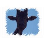 Giraffe Closeup Postcard