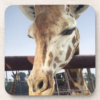 Giraffe Drink Coaster