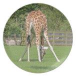 Giraffe Design Dinner Plate
