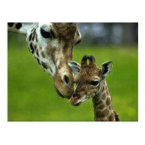 Giraffe Design Postcard