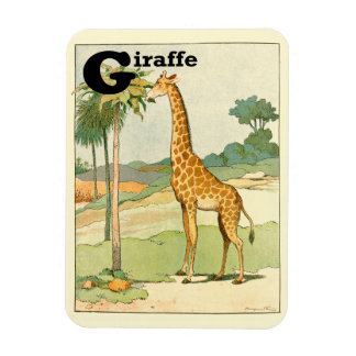 Giraffe Eating Acacia in the Desert Rectangular Photo Magnet