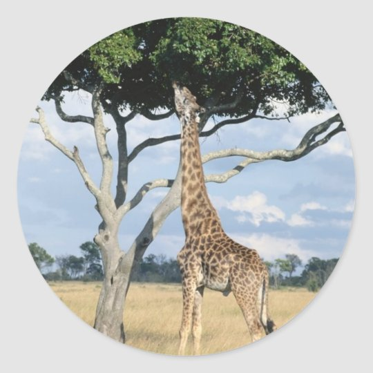 Giraffe Eating Classic Round Sticker