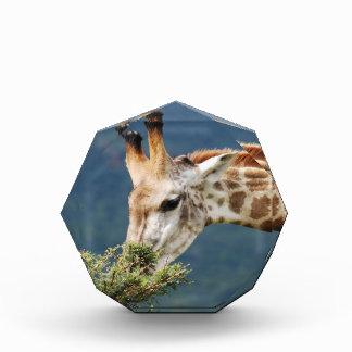 Giraffe eating some leaves award