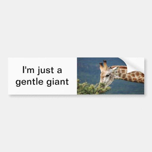 Giraffe eating some leaves bumper sticker
