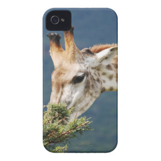 Giraffe eating some leaves Case-Mate iPhone 4 cases