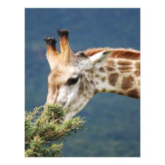 Giraffe eating some leaves flyer
