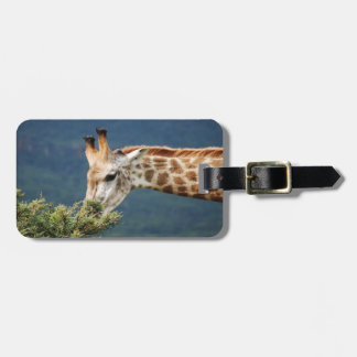 Giraffe eating some leaves luggage tag