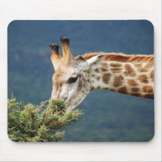Giraffe eating some leaves mouse pad