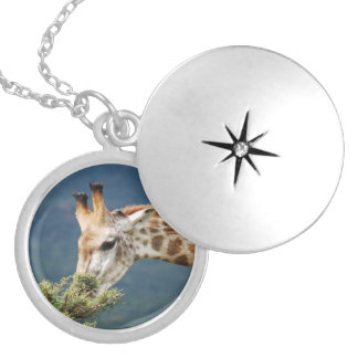 Giraffe eating some leaves round locket necklace