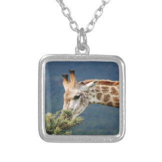 Giraffe eating some leaves silver plated necklace