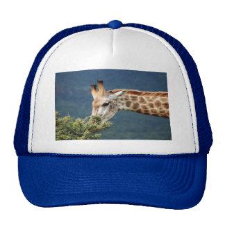 Giraffe eating some leaves trucker hat