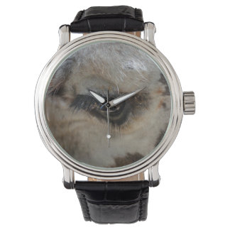 giraffe eye animal close up watch