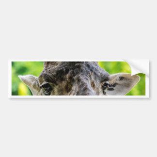 Giraffe Eyelashes Bumper Sticker