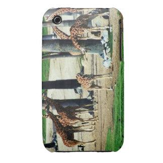 Giraffe Family Case-Mate Case iPhone 3 Case-Mate Cases