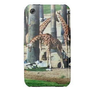 Giraffe Family Case-Mate Case iPhone 3 Case-Mate Case