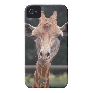 Giraffe Feeding iPhone 4 Cover