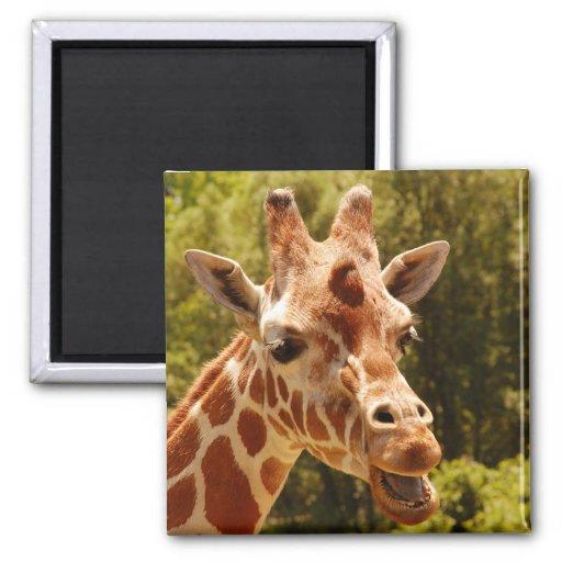Giraffe Fridge Magnets
