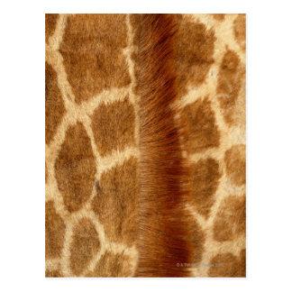 Giraffe Fur Postcard