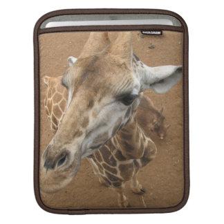 Giraffe Gaze iPad Sleeve