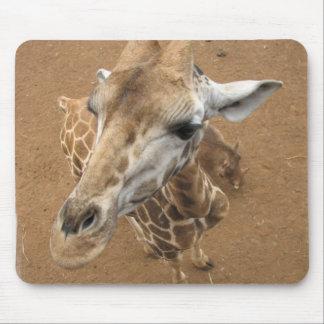 Giraffe Gaze Mouse Pad