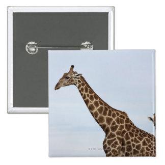 Giraffe Giraffa camelopardalis Chobe National Button