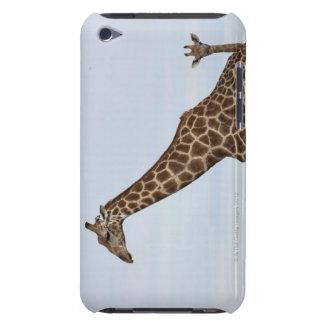 Giraffe (Giraffa camelopardalis), Chobe National Case-Mate iPod Touch Case