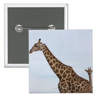 Giraffe Giraffa camelopardalis Chobe National P Pinback Button