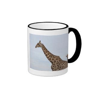 Giraffe (Giraffa camelopardalis), Chobe National P Ringer Mug