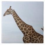 Giraffe (Giraffa camelopardalis), Chobe National Ceramic Tiles