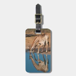 Giraffe (Giraffa Camelopardalis) Drinking Bag Tag