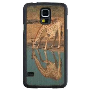 Giraffe (Giraffa Camelopardalis) Drinking Carved® Maple Galaxy S5 Case